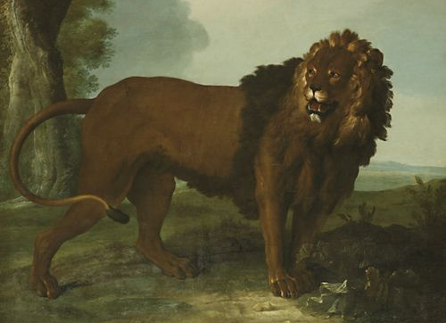 oudry lion